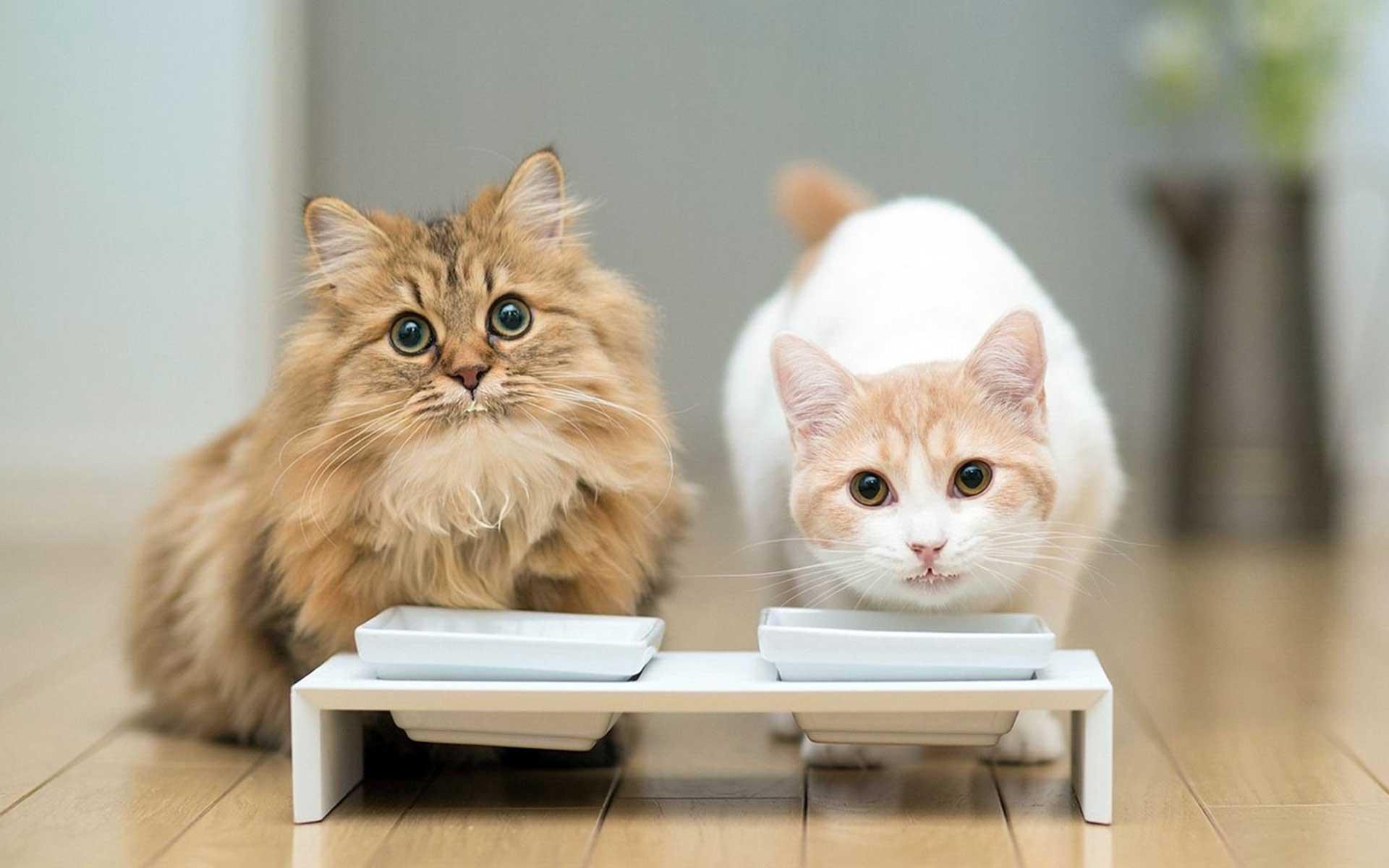 Bilder av katter
